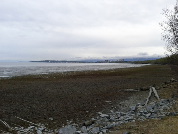 Downtown Anchorage from a coastal bike trail