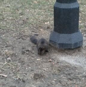 A squirrel in Queen's Park